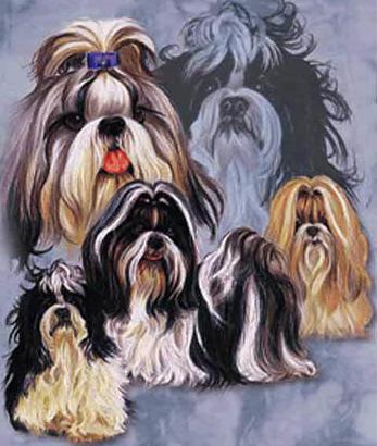 Shihtzu Puppies for Sale in Ohio